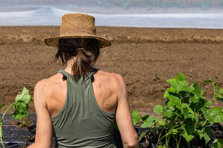 Farmhands tend crops at ecological farm. A close up and rear view of a healthy young lady with toned shoulders and back, at work on an eco-friendly farm as she plants organic vegetables.