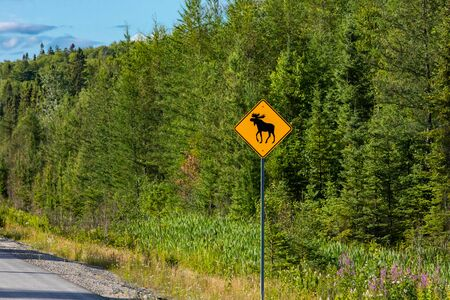 Warning for moose crossing sign, Warning yellow roads signs on roadside, selective focus view with forest trees background