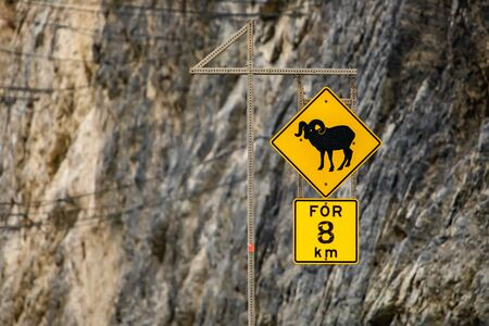Bighorn Sheep Crossing road sign, for eight km. Warning yellow roads signs in selective focus view with rocky slope background Reklamní fotografie