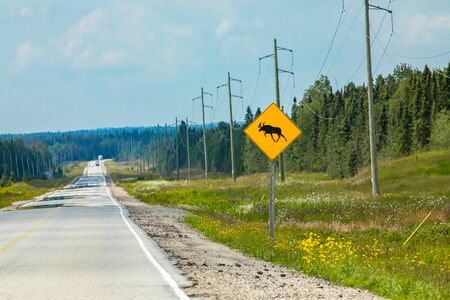 Warning for moose crossing the road, a sign on the roadside with transmission towers and pine trees forest in the background Reklamní fotografie