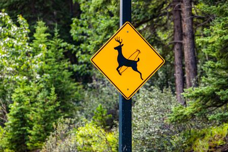 Deer regularly cross this road, be alert for animals sign. Warning road signs, selective focus and close up view with forest trees background Reklamní fotografie
