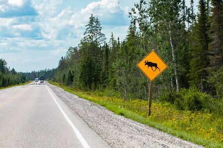 warning for moose crossing the road sign, pine trees forest on the roadsides, Vehicles on Canadian rural roads during a sunny day