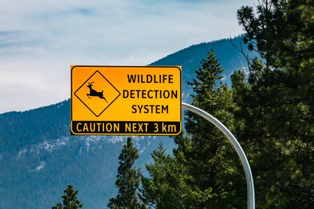 High yellow warning road Sign, wildlife detection system, with deer symbol, Deer regularly cross the road, caution next 3 km, pine trees background