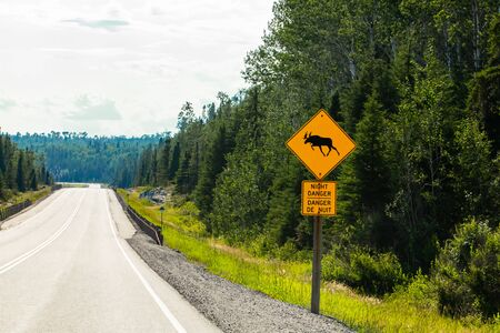 empty road, with a warning for moose crossing the road, night danger Bilingual sign view, pine trees forest on the roadsides