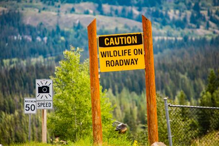 Caution wildlife on roadway, yellow warning sign between two wooden poles, speed radar and 50 km speed limit signs and forests in the background Reklamní fotografie