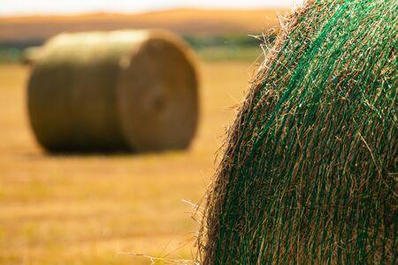 Nahaufnahme von Details runder Heuballen auf dem Lande, eingewickelt in grünes Plastiknetz. Aufnahme mit natürlichem Tageslicht und verschwommenem Hintergrund.