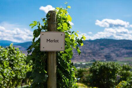 Merlot wine grape variety sign on wooden vertical end post, Canadian vineyard field background, Okanagan valley wine region British Columbia BC Canada