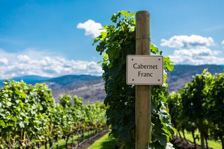 Cabernet Franc wine grape variety sign on wooden vertical end post, vineyard field background, Okanagan valley region British Columbia BC, Canada Banque d'images