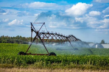 Automated crop management using a linear irrigation system to water young plants on a large scale farm, overhead pipes with rotating sprinkler heads