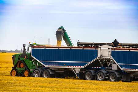 Large scale farming is seen as modern machinery works in a corn field. Two large trailers are filled by the arm of a combine harvester in Canada