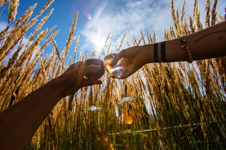 couple hands, tasting, drinking and toasting red and white wine glasses against outdoor in the nature between pampas grass plants, Picnic day concept
