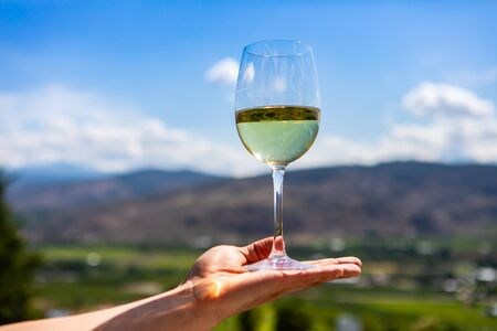 A glass of white wine on hand, selective focus close up view against vineyards fields blurred background, sunny day Okanagan Valley, British Columbia