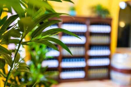 Wine Shop and Tasting Room interior, wine bottles on display shelves background, blurred copy space with green plants leaves selective focus view Stock fotó