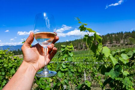 hand holding a glass of pale white wines cheers against Okanagan Valley grapevines vineyards, Canadian winemaking, British Columbia BC, Canada