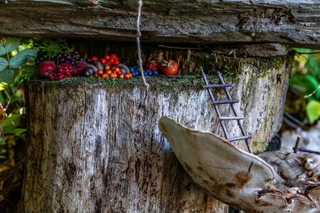 A small secret cache of berries is hidden atop a tree stump in a whimsical fairy scene, offerings to magical beings in enchanted forest with copy space