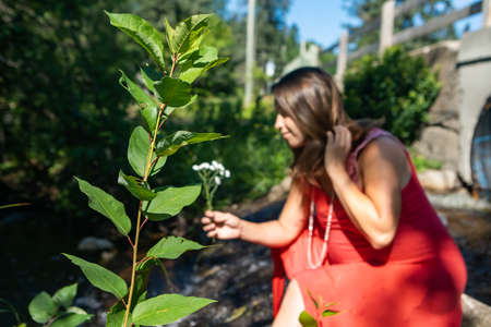 Selective focus on a shrub growing in the foreground, and in the blurred background a pregnant woman in a red dress kneeling to pick a wild flower.