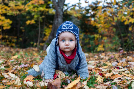 Portrait of cute and curious sitting in crawling position wearing winter clothes, scarf and beenie, on dried leaves in autumn park in Quebec