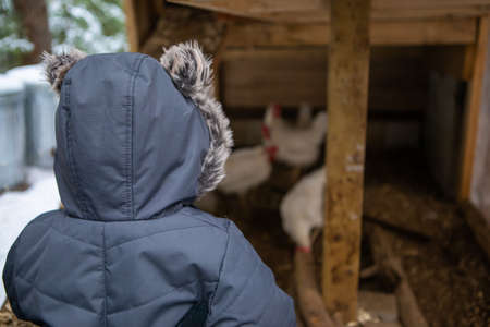View from behind of a baby boy dressed in winter suit with furry hood, looking curiously at a chicken coop with white hens in the blurry background. 写真素材
