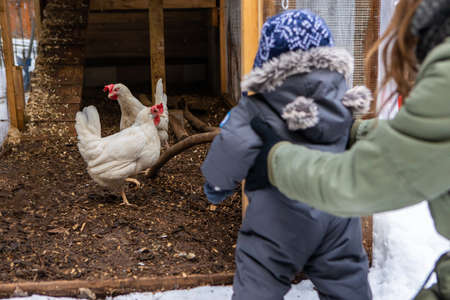 View from behind of mom holding with both hands a baby dressed in winter suit in front of a chicken coop with hens. Babys first nature exploration.