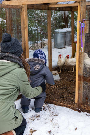 Babys first nature exploration with mom. Views from behind of mom holding the boy in front of a chicken coop with hens, during a snowy winter day.