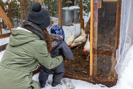 Babys first nature exploration with mom. Views from behind of the two looking at a chicken coop with white hens inside during a snowy winter day.