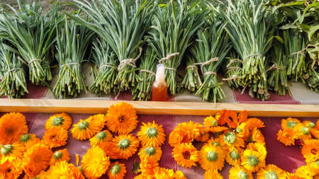 Mesmerizing shot of calendula flowers, featuring natural oil extracted from flowers in a small bottle, cut out stems of flowers can also be seen.