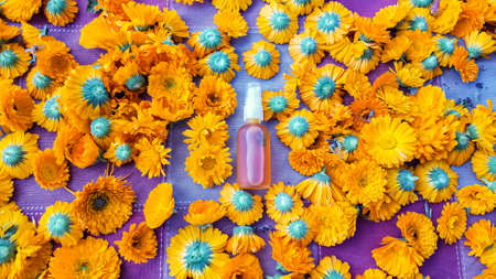 Clear shot of many calendula flowers, freshly cut from their stems, also featuring organic calendula oil in a small spray bottle. 写真素材