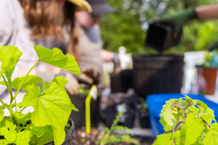 A blurry image of few kids transplanting in the small pots, in the garden, leaves of few plants are blooming around on a bright sunny day.