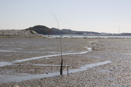 Mud flat in the Korea west sea