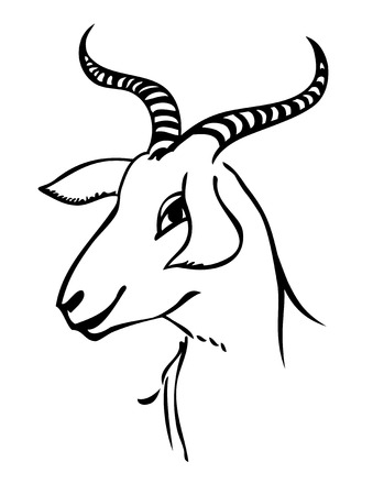 black and white line drawing: portrait of goat
