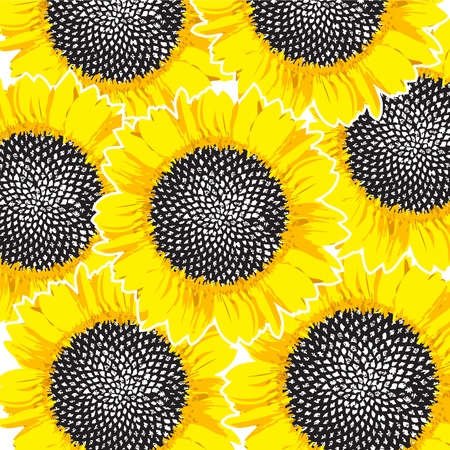 sunflowers background Stock Photo