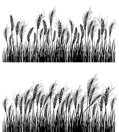 espiga de trigo: Campo de trigo Vectores