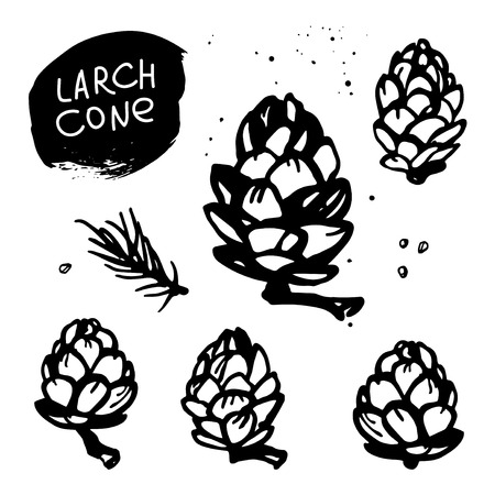 Hand drawn set of larch cones. Black and white sketch illustration