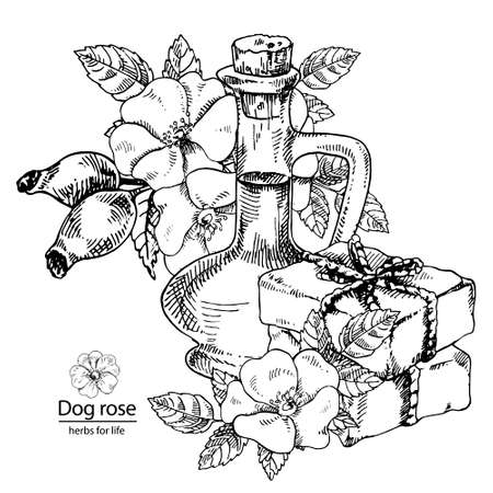 Hand drawn vector illustration of dog rose oil and soap for cosmetics, medicine, treating, aromatherapy, package design healthcare.