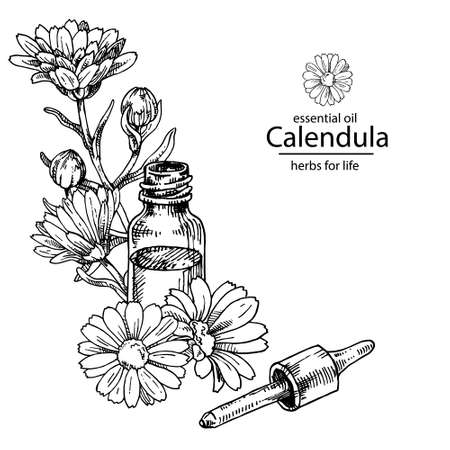 Opened calendula oil glass bottle with dropper. For cosmetics, medicine, treating, aromatherapy, package design healthcare. Vecteurs