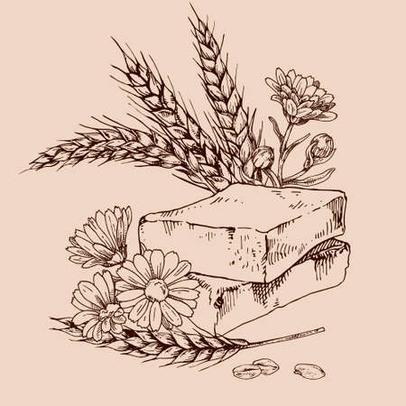 Hand drawn vector illustration of wheat germ and calendula soap for cosmetics, medicine, treating, aromatherapy, package design healthcare.