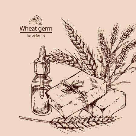 Hand drawn vector illustration of wheat germ oil and soap for cosmetics, medicine, treating, aromatherapy, package design healthcare.