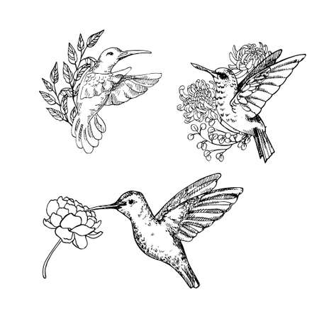 Hand drawn vector illustration of humming bird set with flowers. Natural outline clipart for print, card, textil design