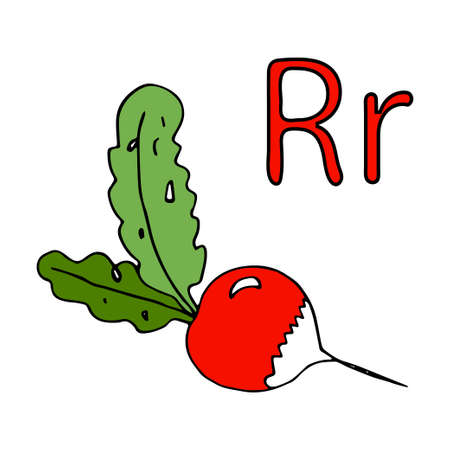 Learning letters, letter R. Cartoon Radish red with white tip. Vector doodle outline freehand drawing, sketch, vegetable, first vitamins from the garden, black lines, isolated on white background, root vegetable. Visual material