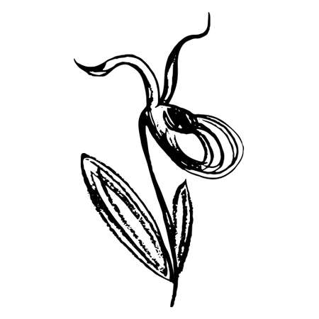 Children's flower page coloring book Vector doodle flower sketch taiga orchid venus slipper. Black outline illustration, drawing isolated on a white background, drawn by hand. Vektorgrafik