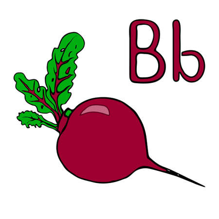 Learning letters letter B. Cartoon beet. Vector outline freehand drawing, sketch, vegetable, vitamins from the garden black lines, isolated white background, root vegetable. Visual material beetroot