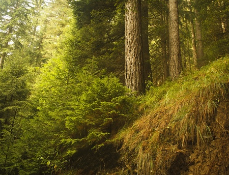 wild beautiful forest photo