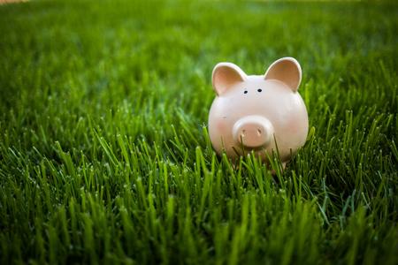 Ceramic pig for saving money outdoor on grass field 版權商用圖片