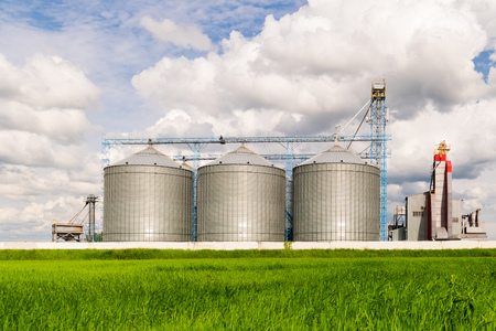 cultivate: Agricultural Silo, foreground sunflower plantations - Building Exterior, Storage and drying of grains, wheat, corn, soy, sunflower against the blue sky with white clouds Stock Photo