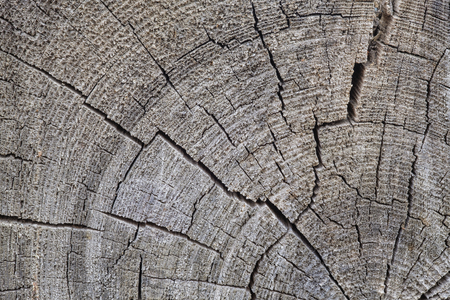 slice of old wood close-up natural nature