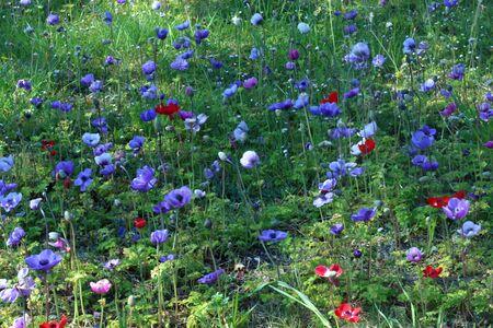 Mountain flowers blooming in spring 5 Foto de archivo