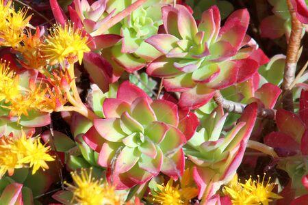 Mountain flowers blooming in spring Foto de archivo