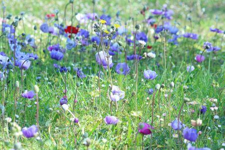 Mountain flowers blooming in spring 3 Foto de archivo