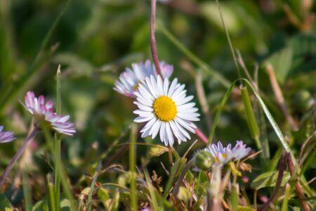 Mountain flowers blooming in spring Zdjęcie Seryjne