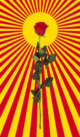 Rose and sun Pop art. Illustration